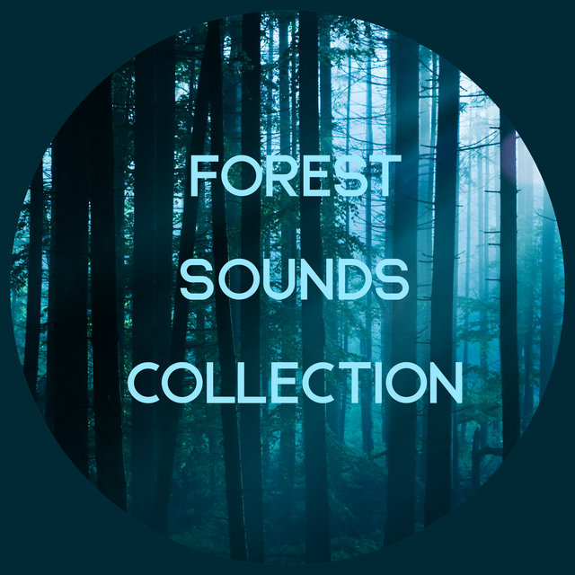 Forest Sounds Collection - Charge Yourself Positively with the Mother Nature Music, Woodland Escape, Birdsong, Piano