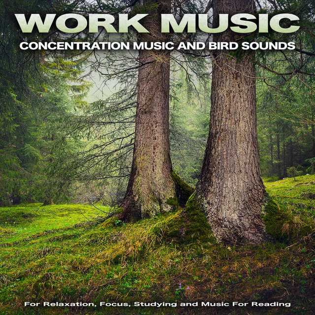 Work Music: Concentration Music and Bird Sounds For Relaxation, Focus, Studying and Music For Reading