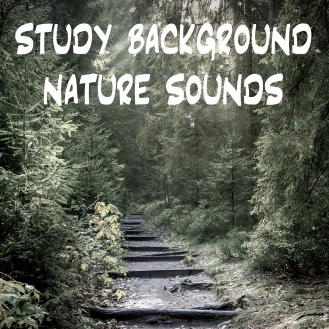 Study Background Nature Sounds