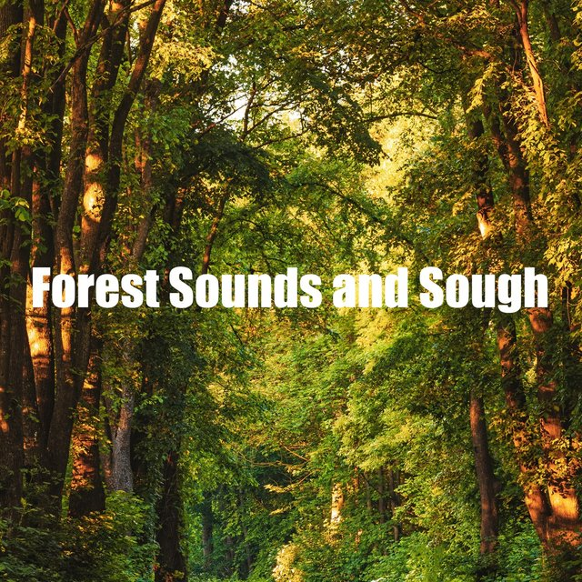 Forest Sounds and Sough