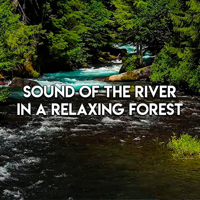 Sound Of The River In A Relaxing Forest