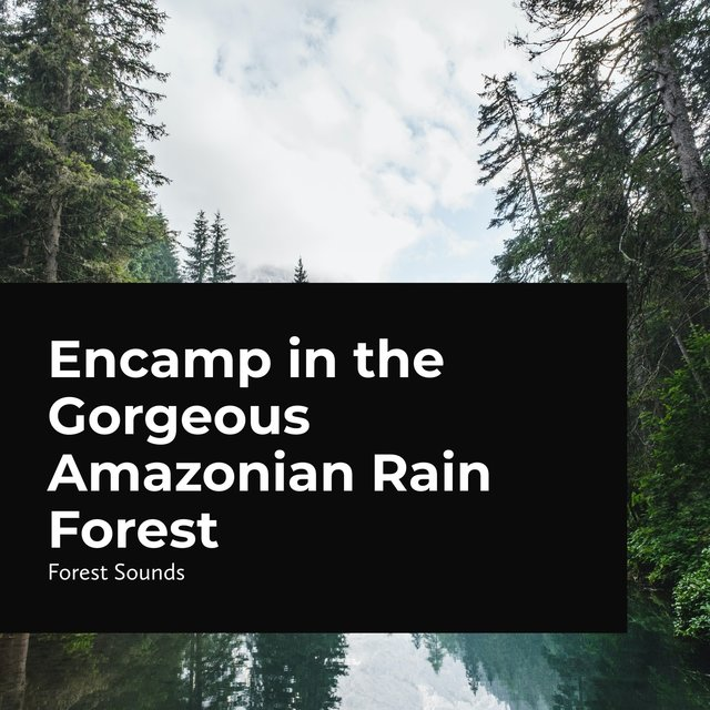 Encamp in the Gorgeous Amazonian Rain Forest