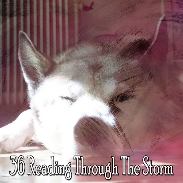 36 Reading Through the Storm