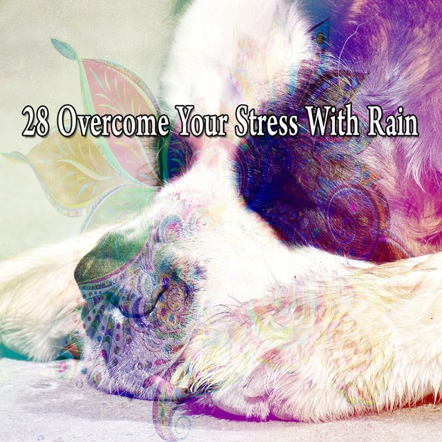 28 Overcome Your Stress with Rain