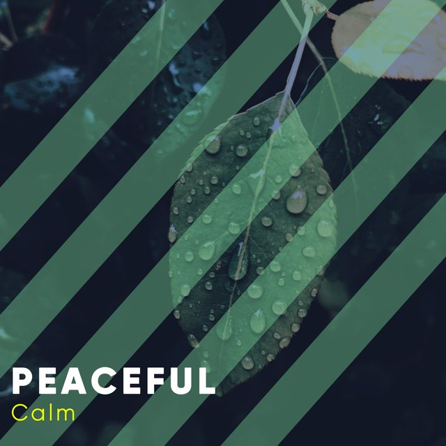 # 1 Album: Peaceful Calm