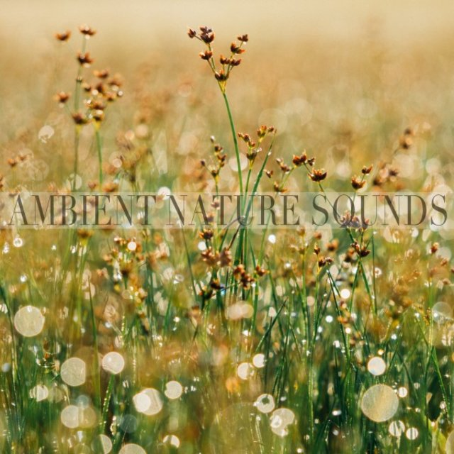 Ambient Nature Sounds