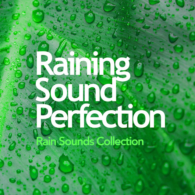 Raining Sound Perfection