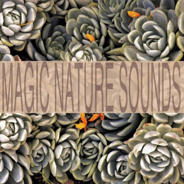 Magic Nature Sounds