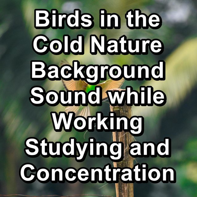 Birds in the Cold Nature Background Sound while Working Studying and Concentration