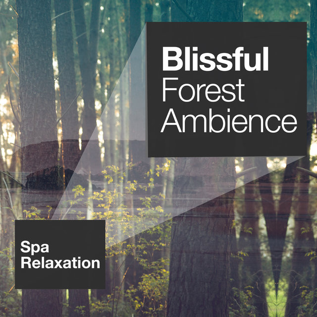 Blissful Forest Ambience