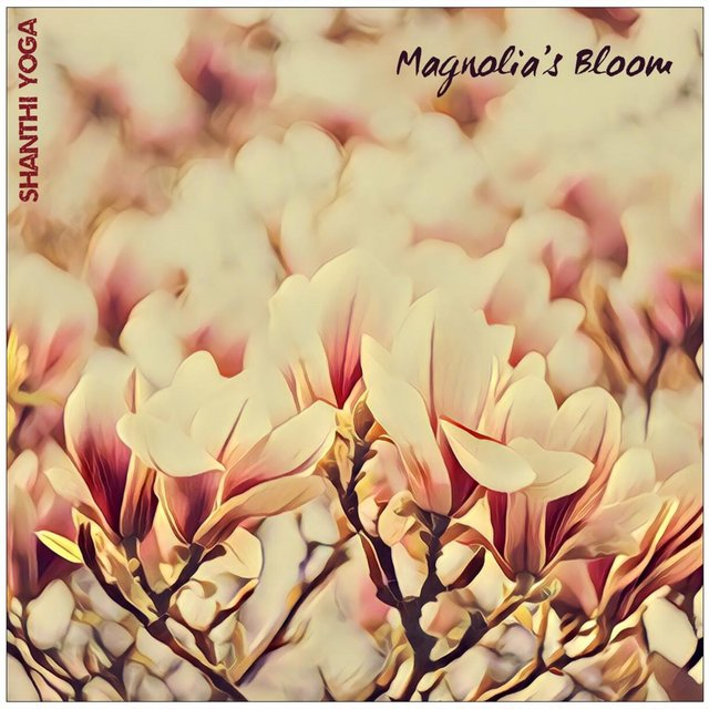 Magnolia's Bloom