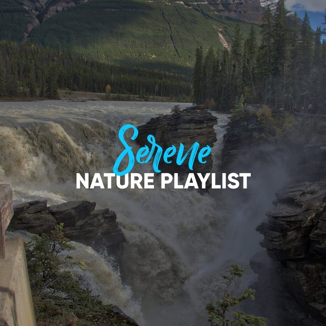 # 1 Album: Serene Nature Playlist