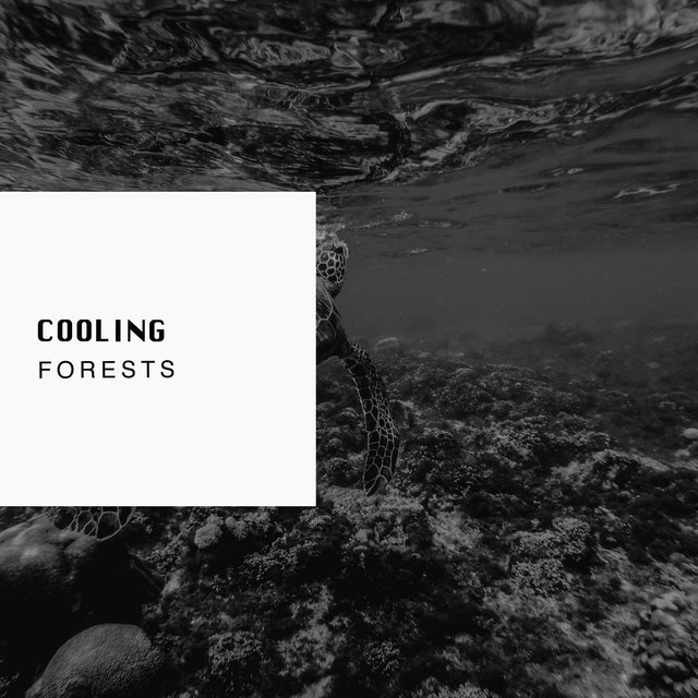 # 1 Album: Cooling Forests