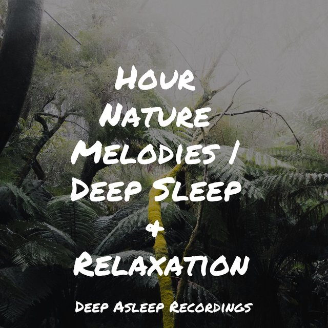 Hour Nature Melodies | Deep Sleep & Relaxation