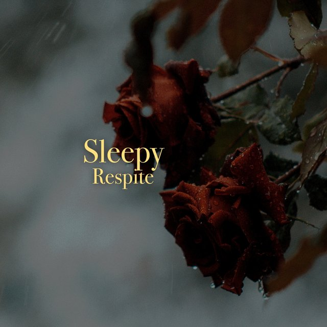 # 1 Album: Sleepy Respite