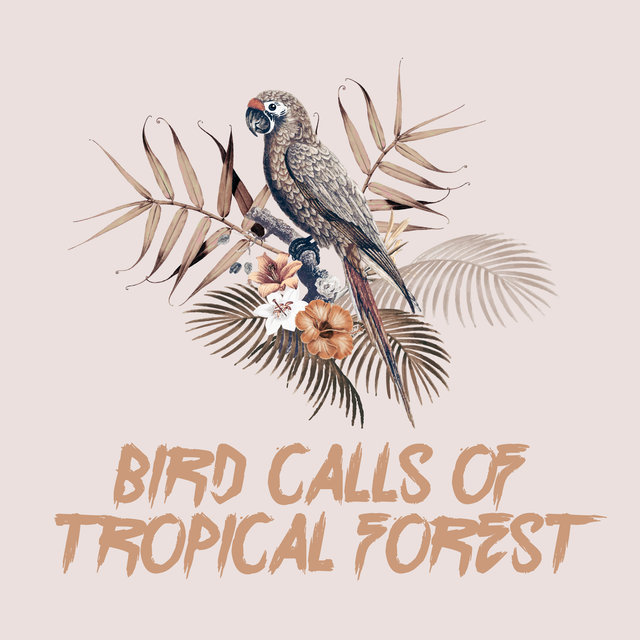 Bird Calls of Tropical Forest