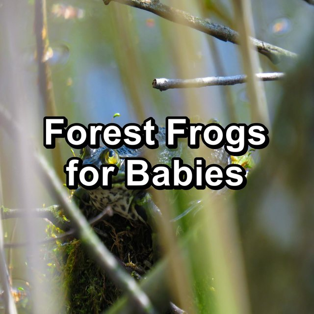 Forest Frogs for Babies