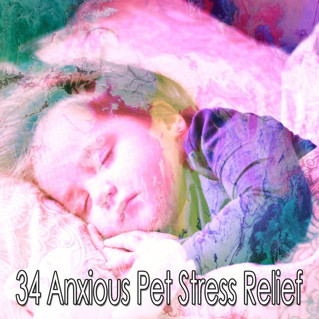 34 Anxious Pet Stress Relief
