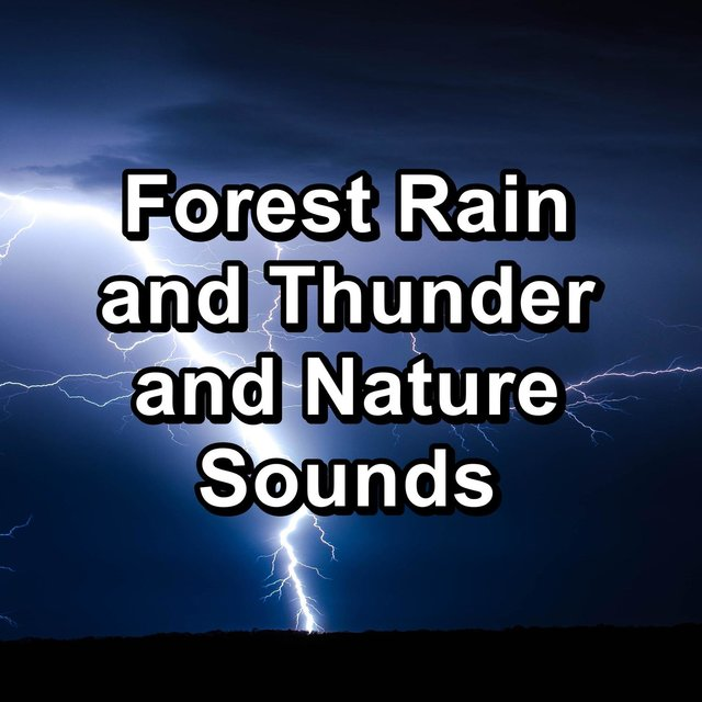 Forest Rain and Thunder and Nature Sounds