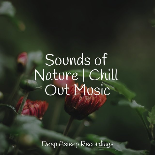Sounds of Nature | Chill Out Music