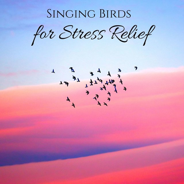 Singing Birds for Stress Relief: Nature Sounds for Serotonin Release, Happiness Meditation