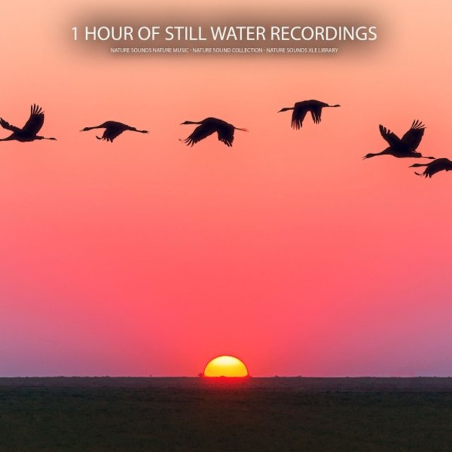 1 Hour of Still Water Recordings