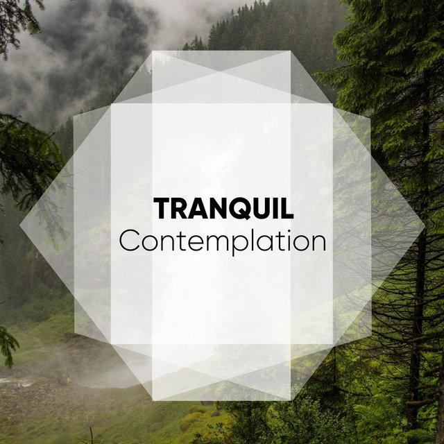 # Tranquil Contemplation