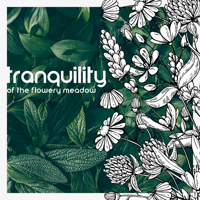 Tranquility of the Flowery Meadow – 1 Hour of Nature Sounds Collection for Rest, Sleep, Meditation, Study and Yoga, Spa Relaxation, Healing Therapy, Positive Thinking