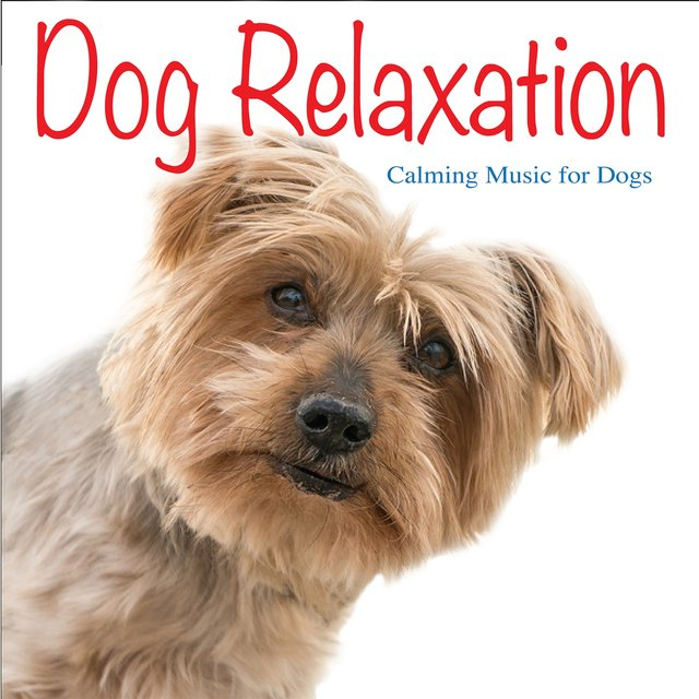 Dog Relaxation: Calming Music for Dogs
