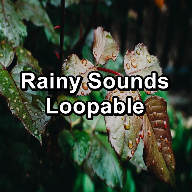Rainy Sounds Loopable