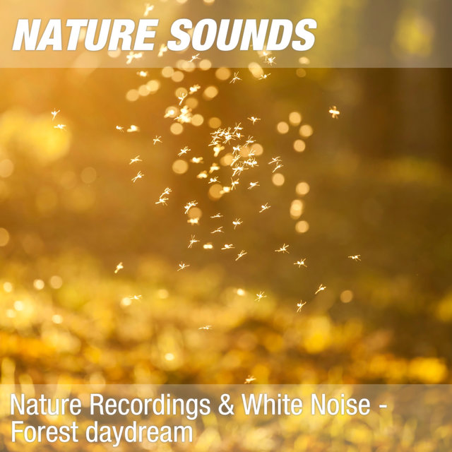 Nature Recordings & White Noise - Forest daydream