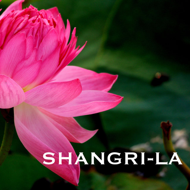 Shangri-La - Traditional Indian Meditation Music, Folk Songs, Sitar Instrumental Background for Mindfulness Meditations