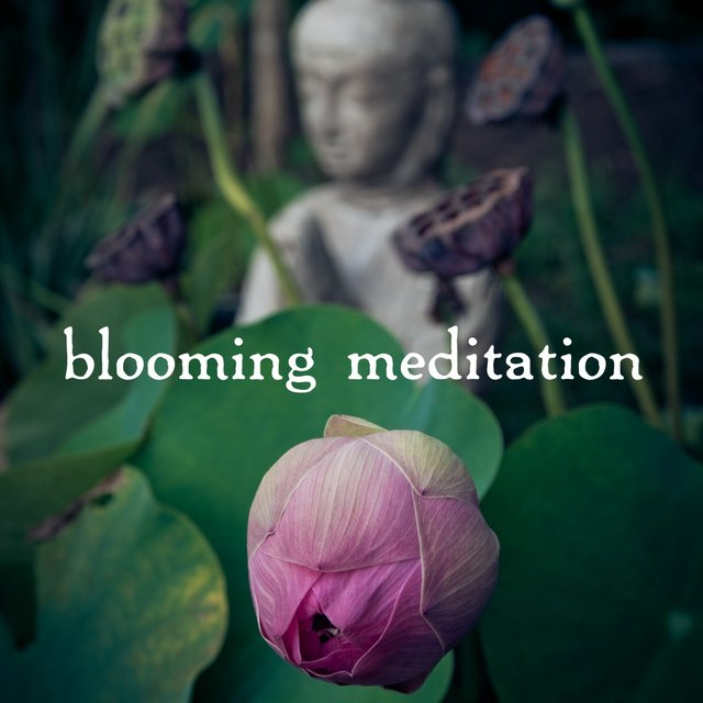Blooming Meditation