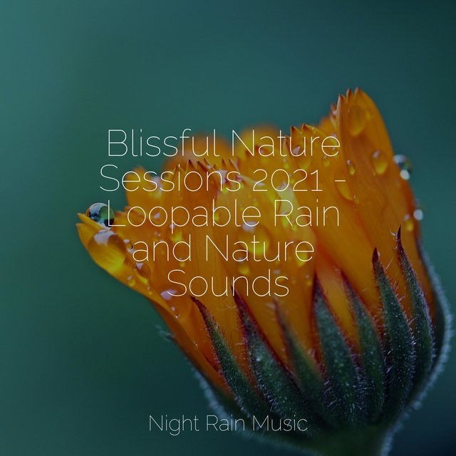 Blissful Nature Sessions 2021 - Loopable Rain and Nature Sounds