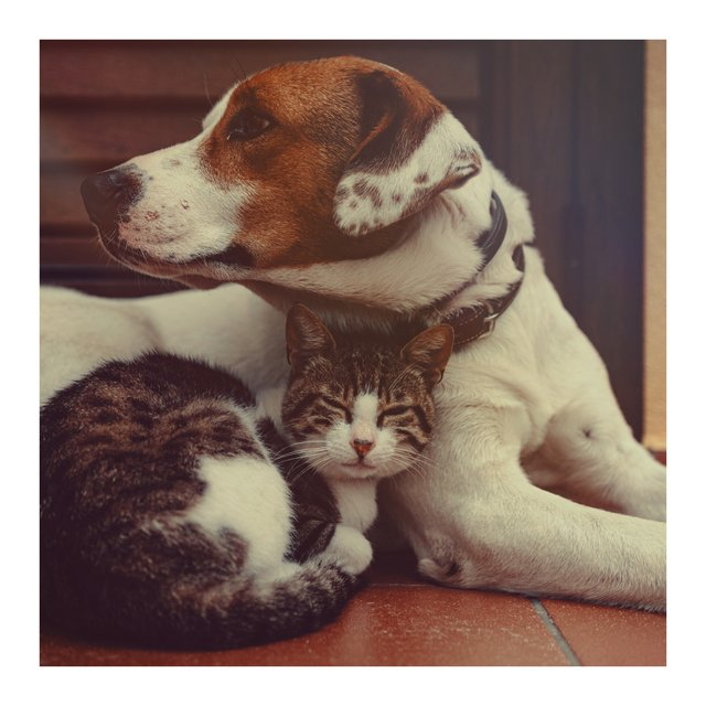 Relaxing Music for Cats and Dogs, Vol. 2
