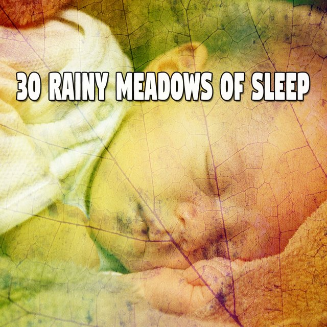 30 Rainy Meadows of Sle - EP