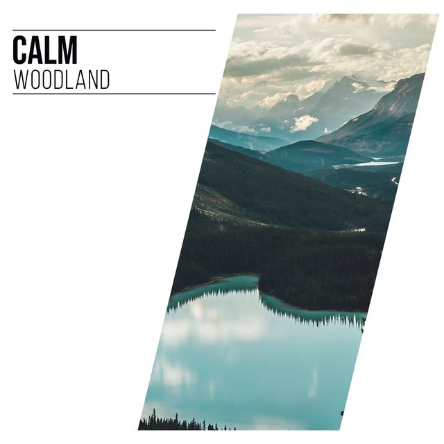 # 1 Album: Calm Woodland