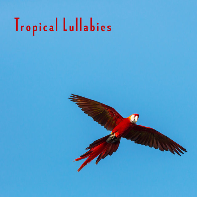 Tropical Lullabies - Best New Age Soft Nature Sounds for Evening Relax in Bed, Total Rest, Calming Down, De-stress & Sleep Peacefully All Night Long