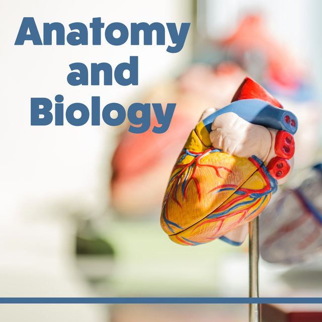 Anatomy and Biology - Learning Together, Best Time to Learn, Interesting Rhythms, Music for Concentration, Focus and Learn
