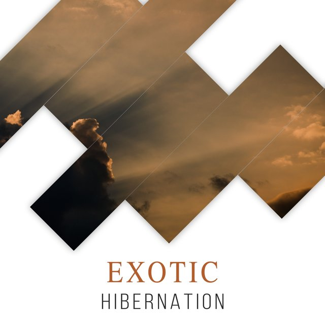 # 1 Album: Exotic Hibernation