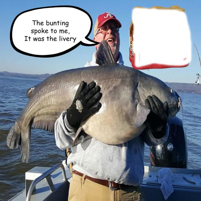 The Complete Guide to Catfishing