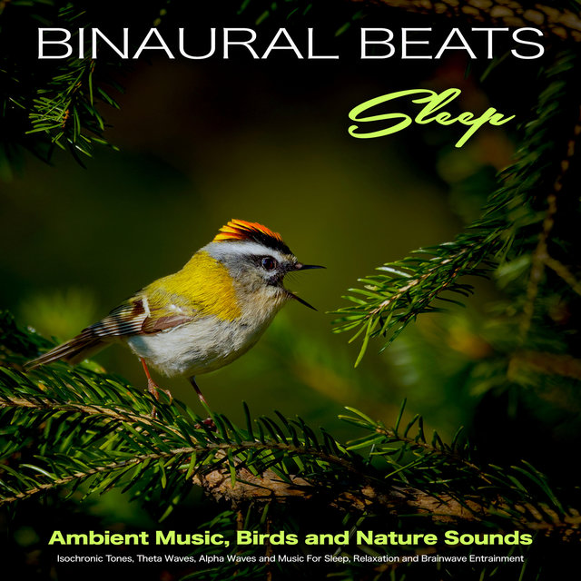 Binaural Beats Sleep - Ambient Music, Birds and Nature Sounds - Isochronic Tones, Theta Waves, Alpha Waves and Music For Sleep, Relaxation and Brainwave Entrainment