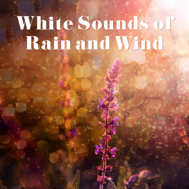 White Sounds of Rain and Wind – Calm Noise, Relaxation, Soothe Mind, Sleep Better, Stress Relief, Wellbeing, Total Rest, Nature Sounds