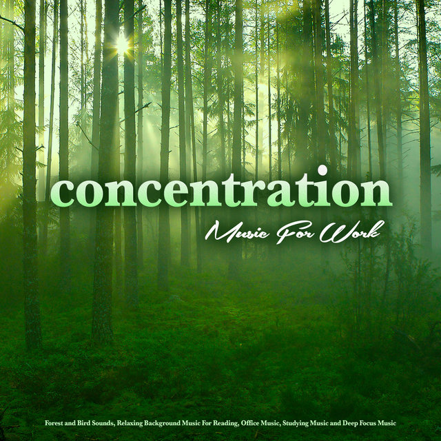 Concentration Music For Work: Forest and Bird Sounds, Relaxing Background Music For Reading, Office Music, Studying Music and Deep Focus Music