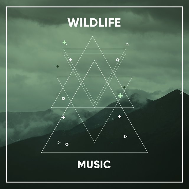 Soft Sleepy Wildlife Music