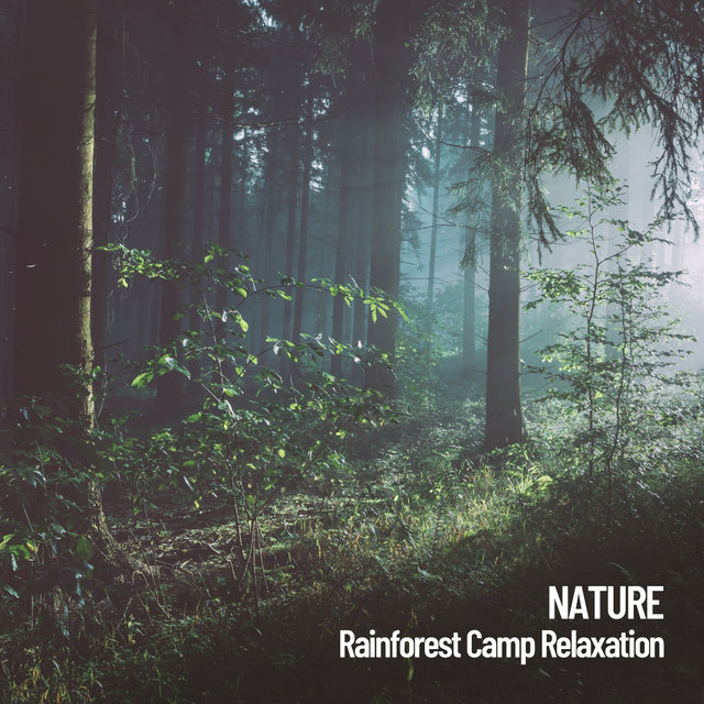 Nature: Rainforest Camp Relaxation