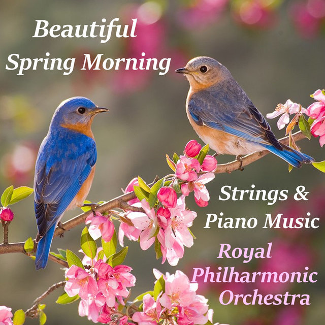 Beautiful Spring Morning Strings & Piano Music Music