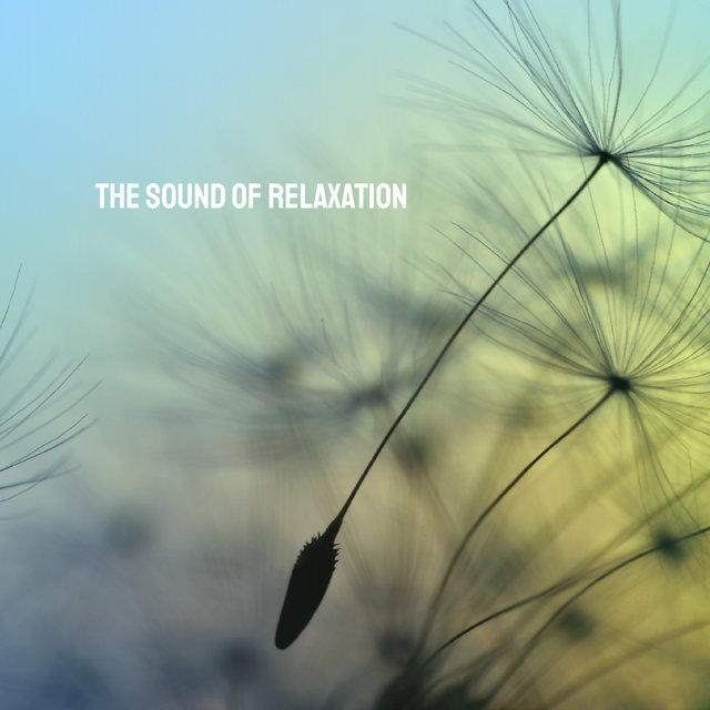 The Sound of Relaxation