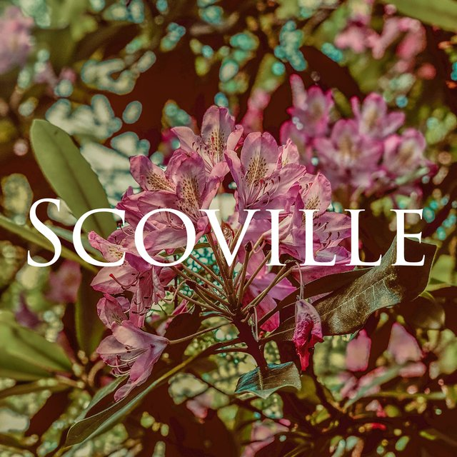 Cover art for album Scoville by King Jenkins