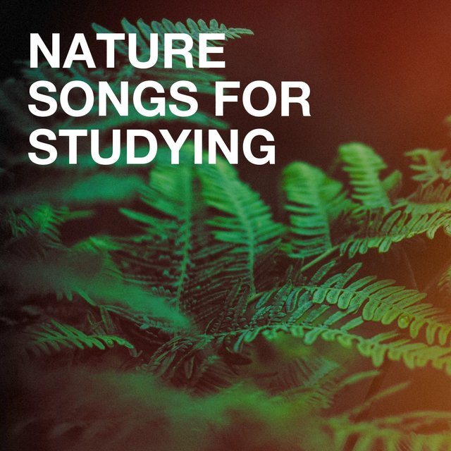Nature Songs for Studying